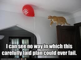 Cat plan