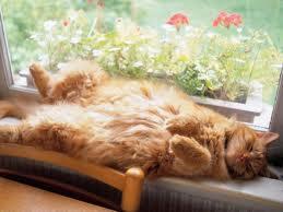 sleepong cat